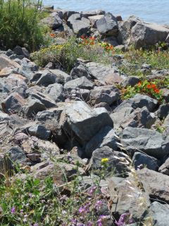 Flowers on Rocks