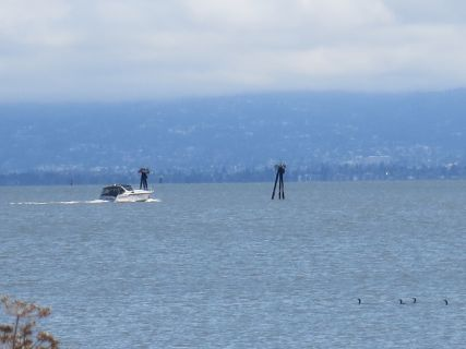 Power boat & Cormorants