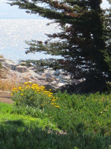 Yellow daisies & Juniper