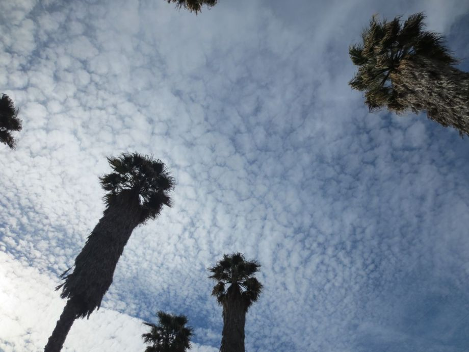 Palm Tree Marauders 2