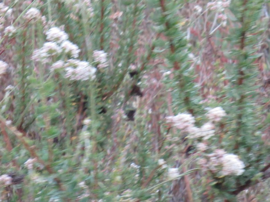Blurry Flowers