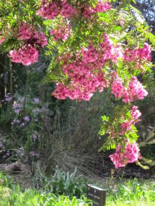 Overhanging Blushes